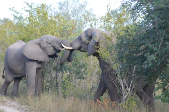 Don't Argue with an Elephant